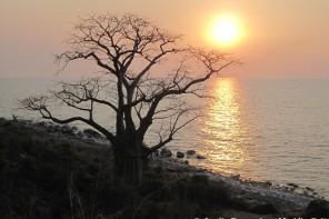 baoba likoma