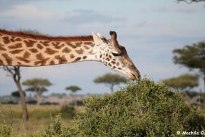 safari9 (9)