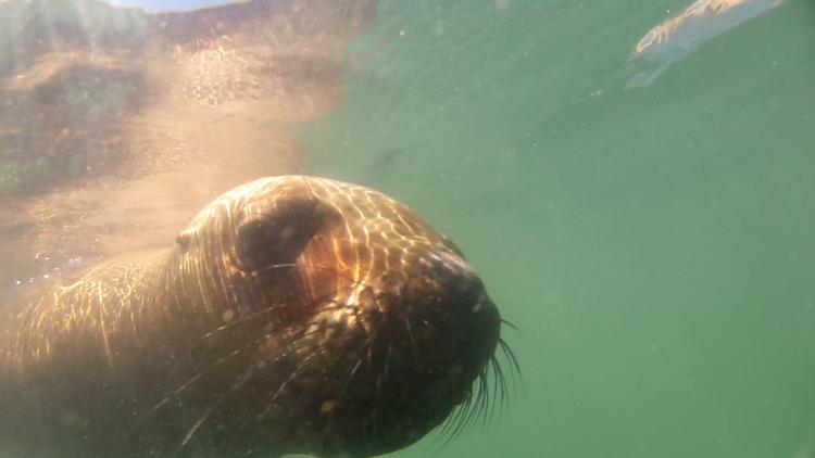 leão marinho patagônia